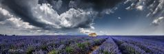 LAVENDEL CLOUDS , Provence, France