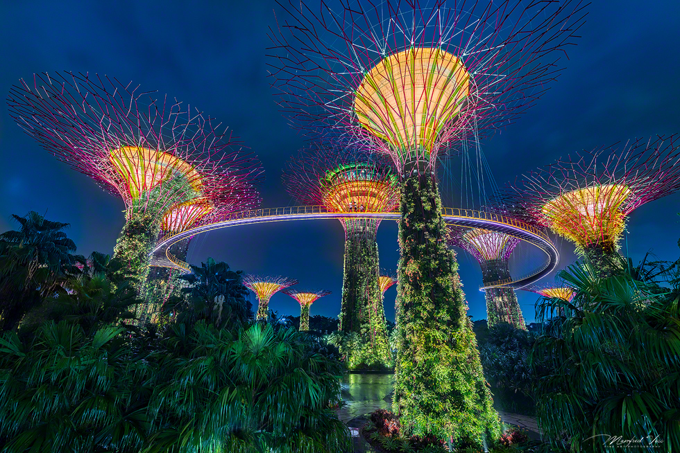 Supertrees in the Gardens of the bay , Singapur , Asien