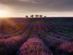 Trees , Provence, France